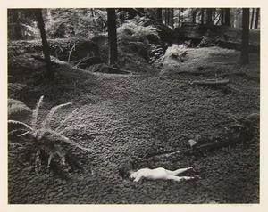 ウィン・ベロック「森の少女」