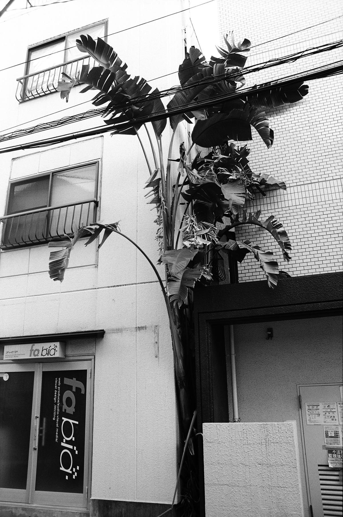 小林紀晴のエッセイ「TOKYO NETURE PHOTOGRAPHY」第9回