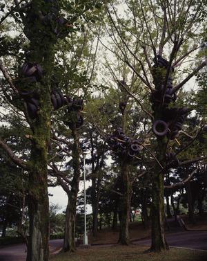 タイヤの生る木