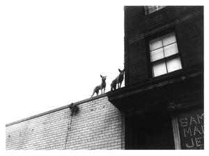5 屋上犬