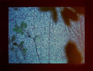 DSCF1219メカス雨だれ600