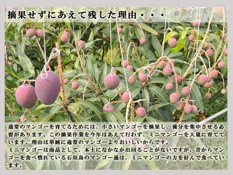 kodamamango_08