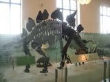 ステゴザウルス