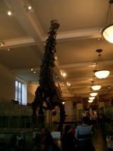 ブロントサウルス