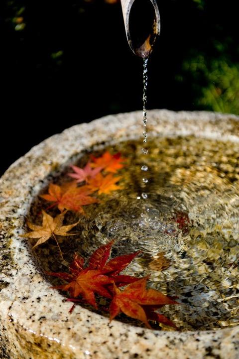 もみじと水鉢