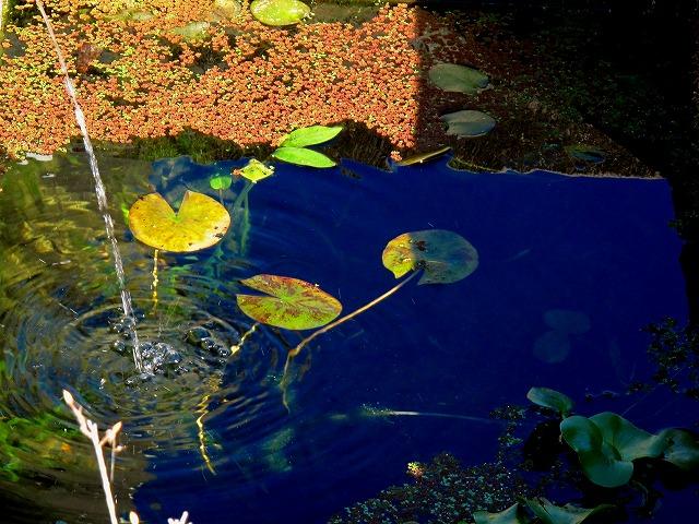 スッキリしたメダカ池