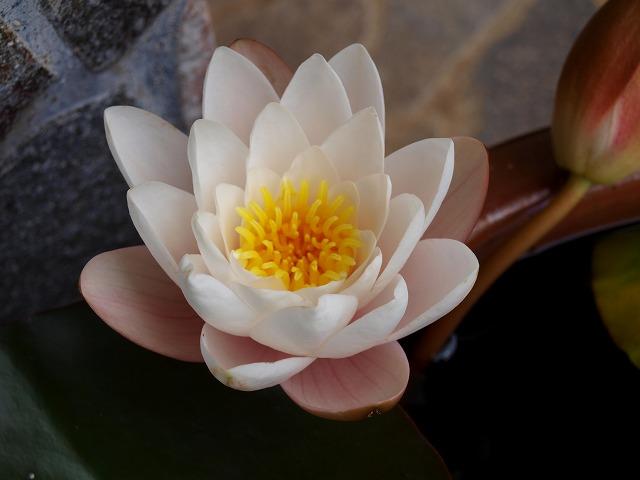 今年4つ目の花