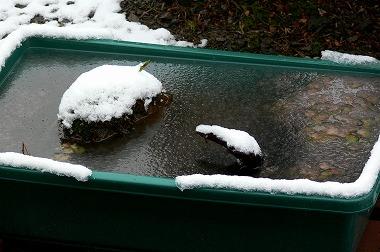雪のプラ船水槽