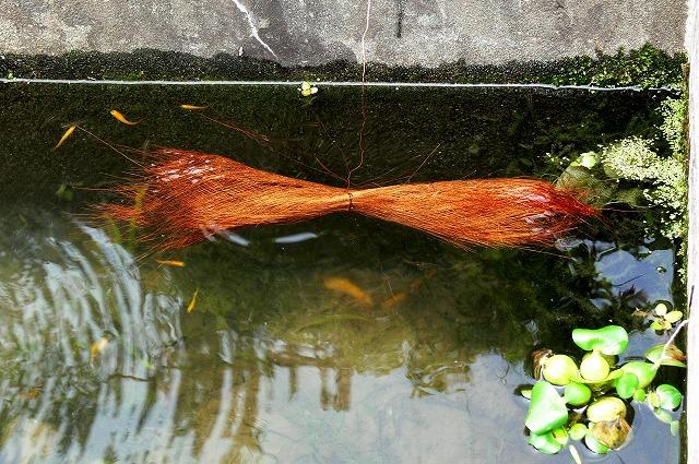 0505シュロの皮を池に浮かべたところ