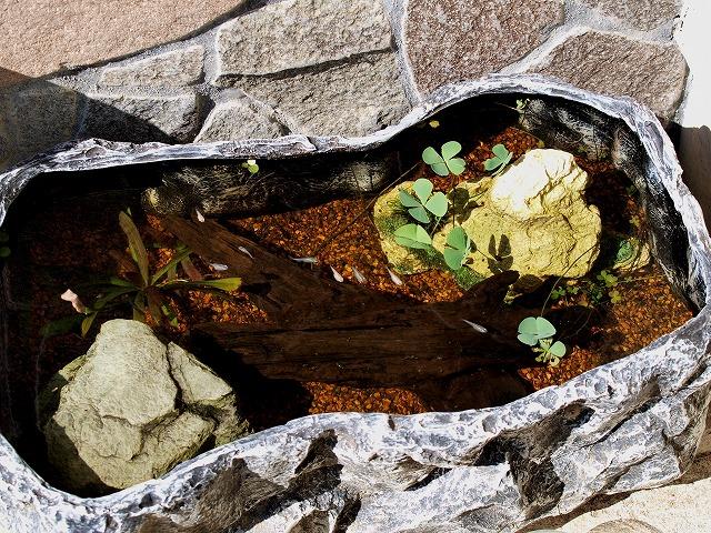 流木の屋外水槽