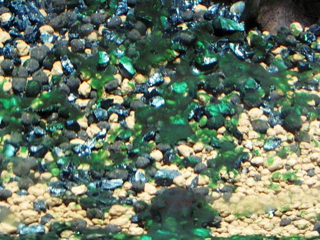 藍藻の繁殖