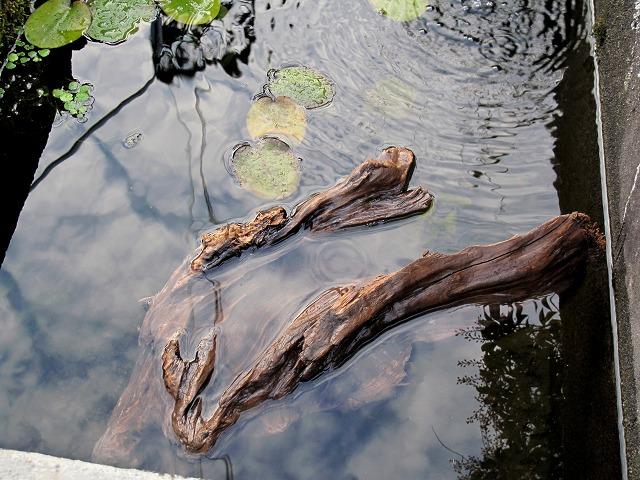 水に浮いた流木