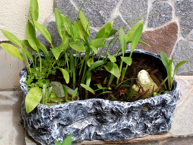 楊貴妃の屋外水槽