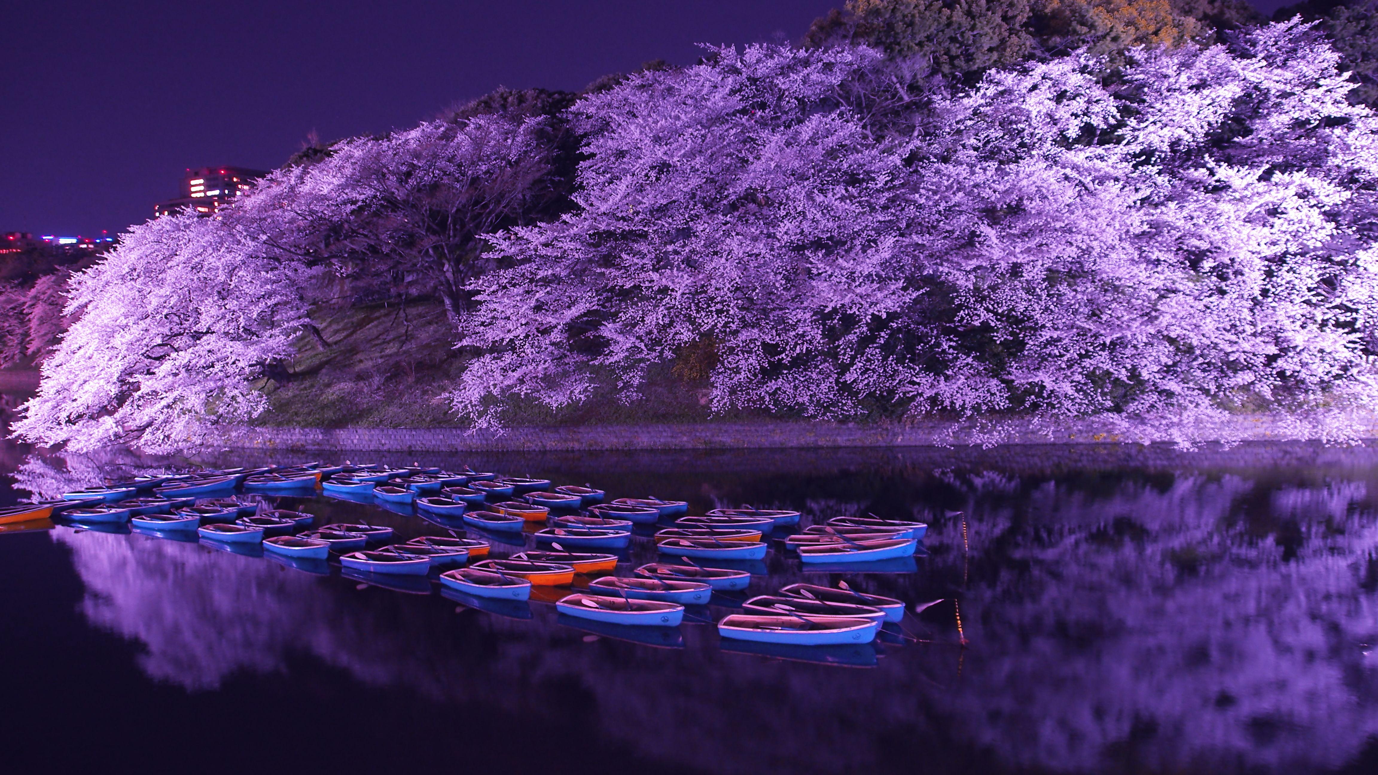 壁紙6 千鳥ヶ淵の14 4月の桜 Tokyo Nightscape