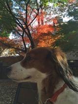 紅葉キッシュ