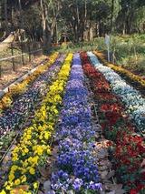2016花畑