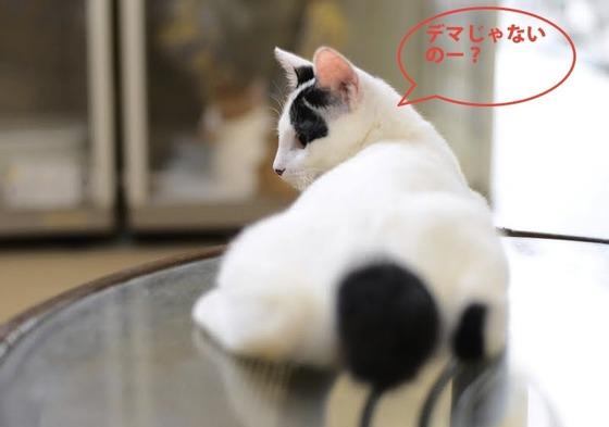 猫訓練 089