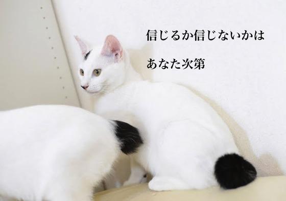 猫訓練 078