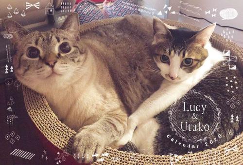 Lucy&Utako2020カレンダー