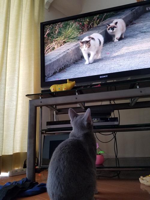 お気に入りのテレビ