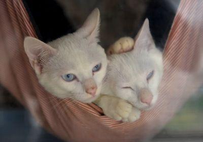 猫大祭 071
