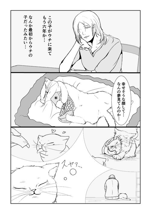 猫、夢を見る