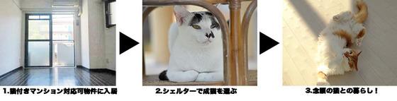 猫マンションとは