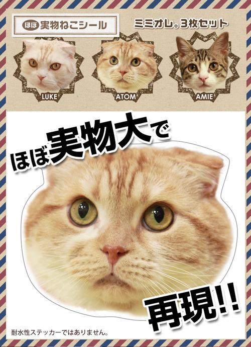 mimi_seal01-1