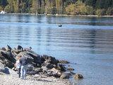 zqn lakeside