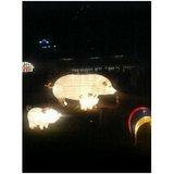 ランタン豚