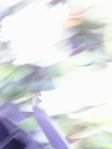 20050505161038.jpg