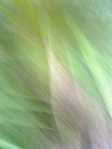 20050508111306.jpg