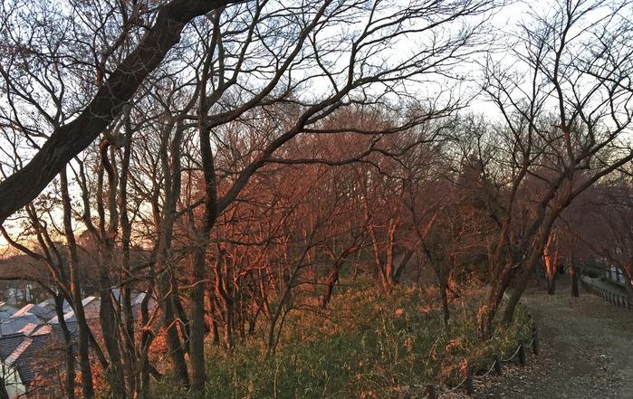 赤く染まる木々_2000_edited-1