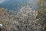 紅葉と10月桜