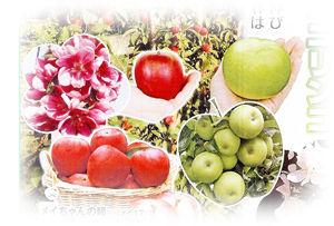 リンゴ300