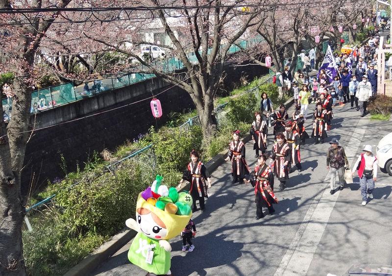 0桜1_800