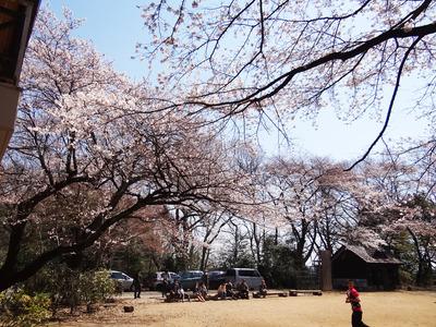 分校の桜3