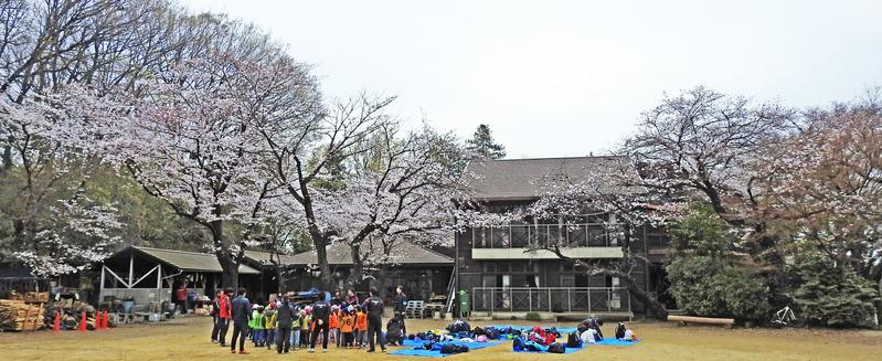 0分校の桜2501
