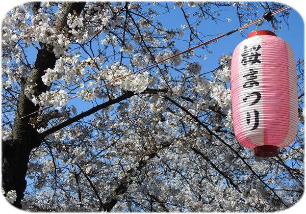 0桜まつり600