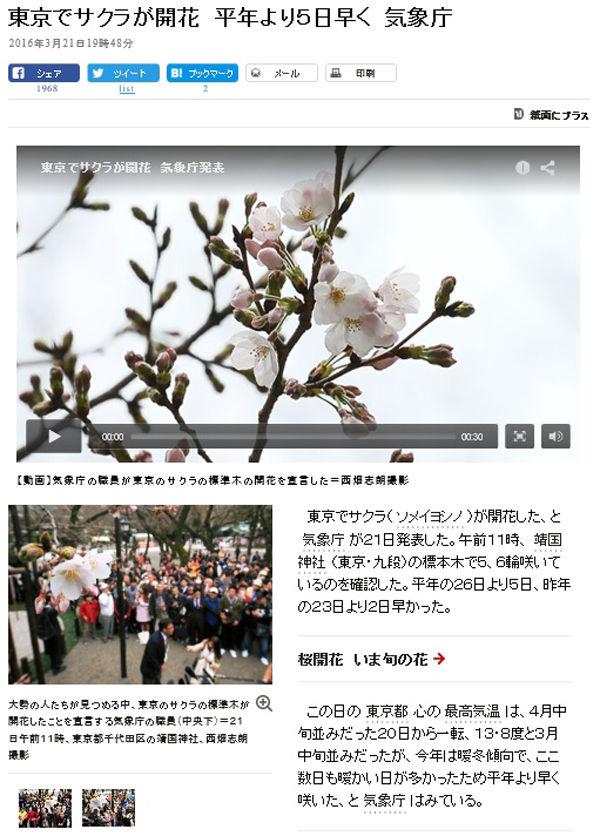 桜開花600