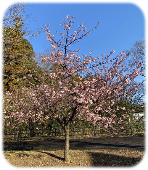 0緑農会館桜500