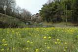 春の里山1