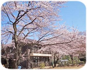 H24桜300n