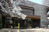 黒川分校桜1