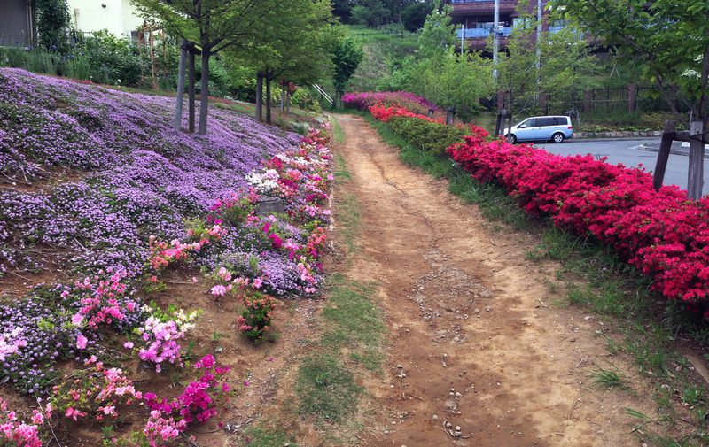 0咲き誇る花