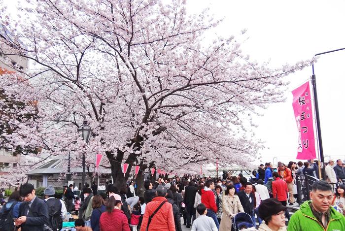 0隅田川桜2700