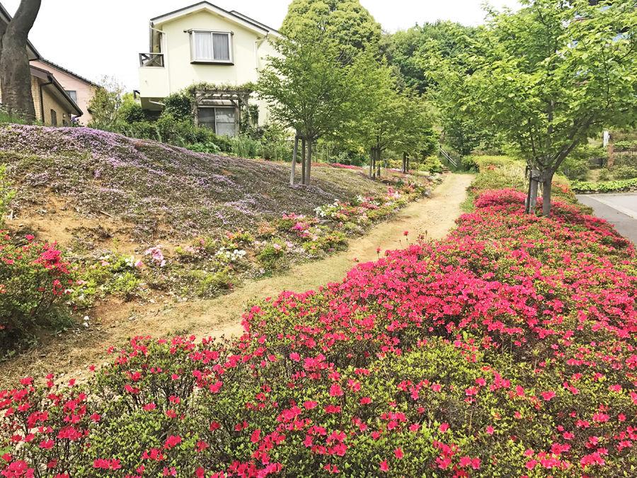 花が咲き乱れるよこやまの道へ続く道_e900