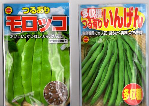 インゲン豆種500