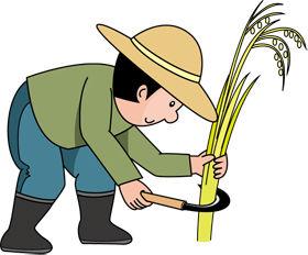 稲刈り280