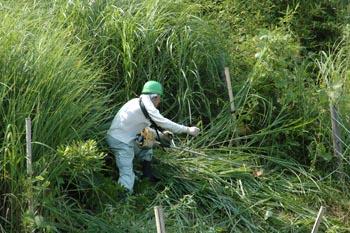 斜面の草刈350